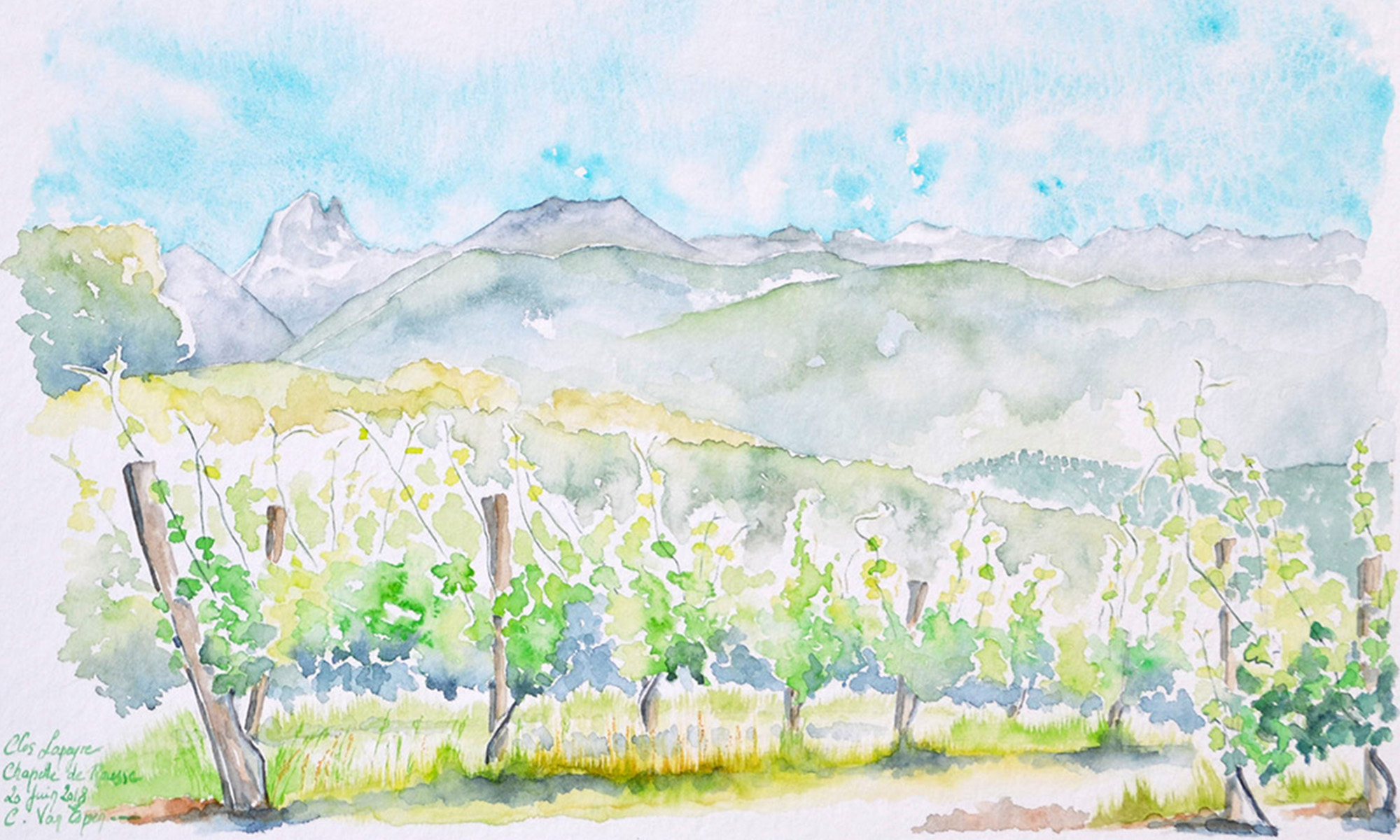 A l'aquarelle, en premier plan deux rangs de ceps de vigne. Les deux sont orientés de la gauche vers la droite, ils sont sur une pente descendante vers l'horizon. Le premier rang est à gauche de la feuille, le second à droite, il ne laisse voir que deux ceps. Derrière, des coteaux, puis le piémont pyrénéen. Au fond, la chaine des Pyrénées avec sur la gauche, le pic du Midi d'Ossau. Les ceps sont dans les tons de vert vif, le ciel bleu turquoise, la chaine bleu gris.