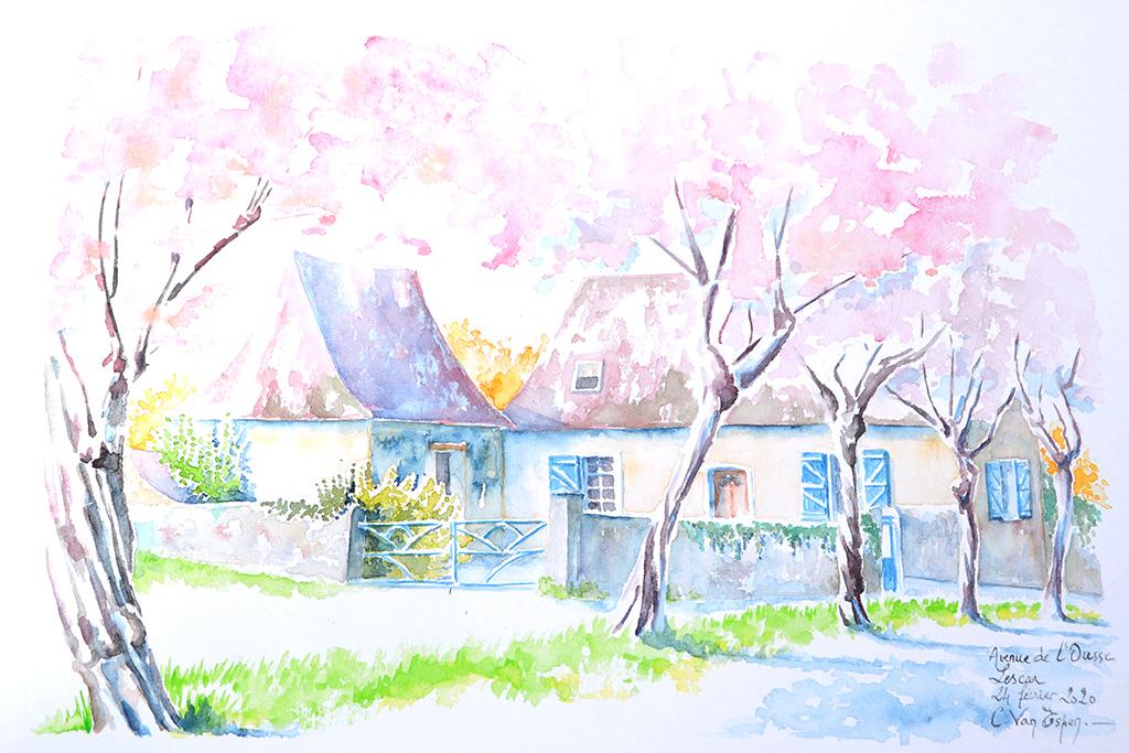 Aquarelle réalisée à Lescar, avenue de l'Ousse. En premier plan une haie de prunus en fleurs roses. Derrière, une maisonnette traditionnelle béarnaise.au boiseries bleu.