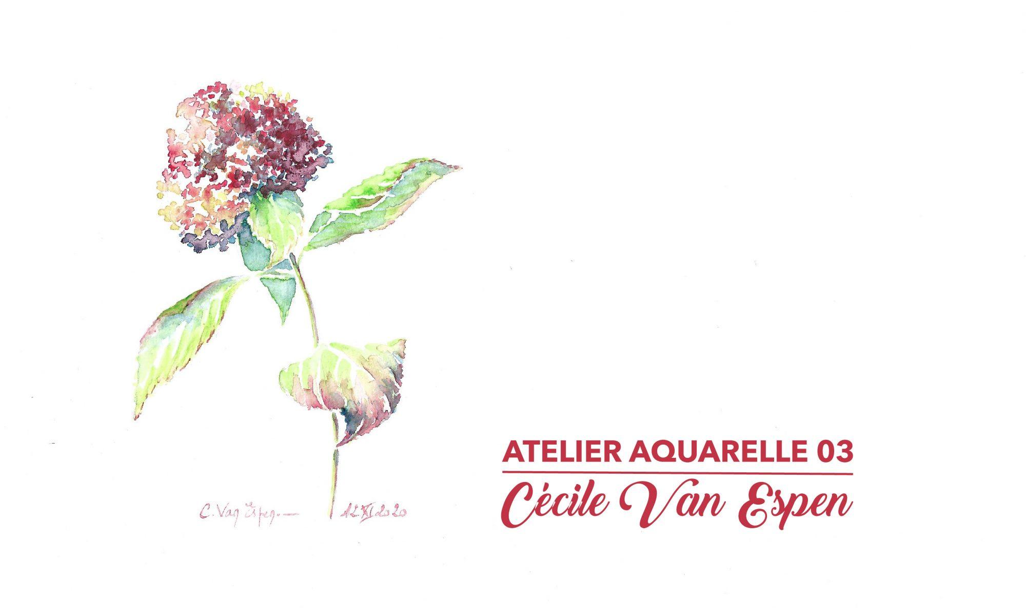 Hortensia, visuel de présentation de l'atelier aquarelle 03, il s'agit d'une fleur d'hortensia, placée sur la gauche de l'image et sur toute la hauteur. La boule de fleurons a des tonalités qui oscillent du rose au vert en passant par l'ocre. Les feuilles sont vertes avec les reflets roses sur la dentelure.