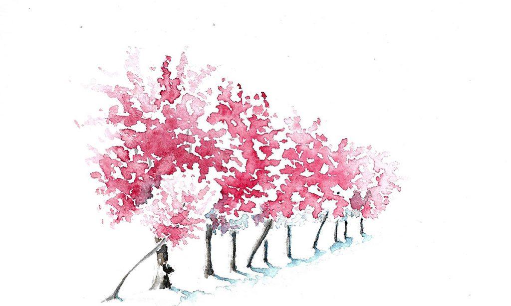 Ateliers de printemps, haie de prunus à l'aquarelle, en fleurs, rose, en perspective. Le premier plan est à gauche, la haie s'éloigne vers la droite en diminuant progressivement.